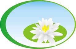 Цветки воды Стоковое Изображение RF