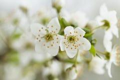 Цветки времени весны Стоковое Изображение