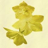 Цветки выбитые сбросом на желтой предпосылке Стоковые Фото