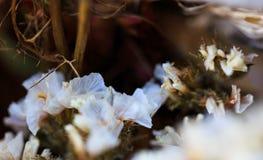 Цветки высушенные белизной на рынке в естественном свете Стоковые Изображения