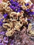 цветки высушенные букетом Фиолетовая, белая и желтая предпосылка цветков стоковое изображение rf