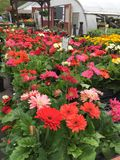 Цветки в апреле Стоковое фото RF