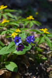 Цветки в апреле Стоковые Фото