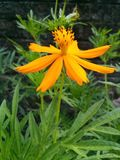 Цветки в Асоме Стоковые Фото