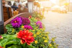Цветки в баках рядом с кафем Стоковая Фотография
