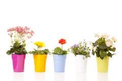 Цветки в баках стоковые фотографии rf