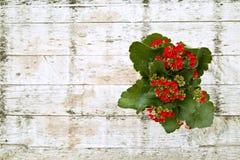 Цветки в баке на старом деревянном столе стоковые фотографии rf