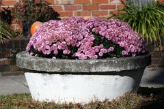 Цветки в баке. Стоковая Фотография