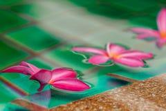 Цветки в бассейне стоковые изображения