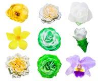 Цветки в белизне изолировали установленные яркую и красочный Стоковые Изображения