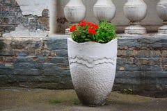 Цветки в белом винтажном flowerbed стоковые изображения rf