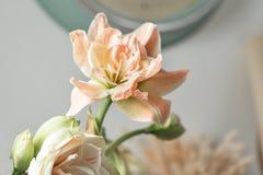 Цветки в большой стеклянной вазе Красивые цветения цветка амарулиса Полевые цветки - Hippeastrum сбор винограда бумаги орнамента  Стоковое Фото