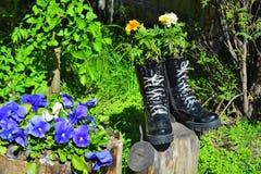 цветки в ботинках Стоковое Изображение RF