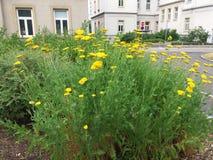 Цветки в больнице Стоковые Фото