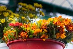 Цветки в ведре Стоковая Фотография