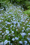 Цветки в дворе Стоковые Изображения RF