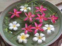 Цветки в воде Стоковые Фото