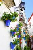 Улица цветка стоковые фото