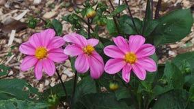 Цветки в дендропарке Стоковая Фотография