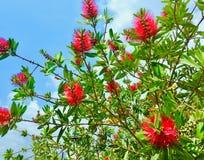 Цветки в деревне стоковые фото