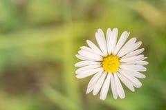 Цветки в дожде лето предпосылки естественное Стоковое Изображение