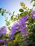 Цветки в заходе солнца Стоковое фото RF