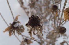 Цветки в зиме стоковое изображение rf
