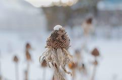 Цветки в зиме стоковая фотография rf