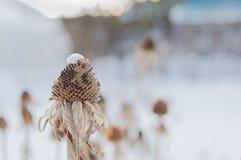 Цветки в зиме Стоковые Фотографии RF