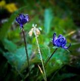 Цветки в изоляции утреннего времени Стоковые Изображения