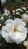 Цветки в Испании Стоковые Фото