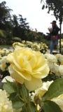 Цветки в Испании Стоковая Фотография
