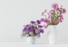 Цветки в керамических вазах Стоковая Фотография