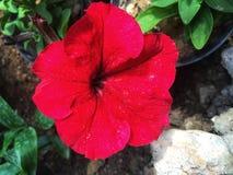 Цветки в красивых цветах под солнцем стоковая фотография