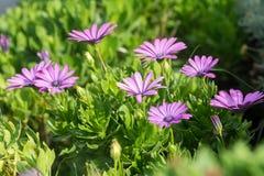 Цветки в крупном плане лета стоковые изображения rf