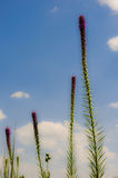 Цветки в небе Стоковые Фотографии RF