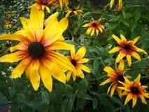 Цветки в октябре Стоковое фото RF