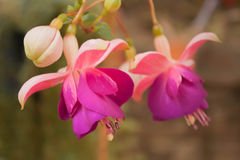 Цветки 1 в октябре Стоковое фото RF