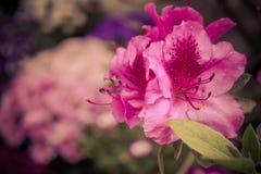 Цветки 2 в октябре стоковое фото