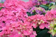 Цветки 3 в октябре стоковая фотография rf