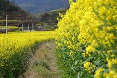 цветки в дороге Стоковое Изображение