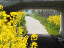 цветки в дороге Стоковое Фото
