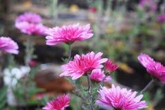 Цветки в осени Стоковое Изображение RF