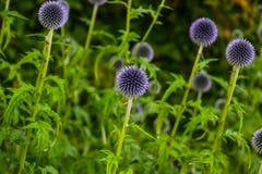 Цветки в одичалом саде Стоковое Изображение RF