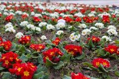 Цветки в парке города стоковое изображение