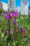 Цветки в парке города стоковые изображения rf