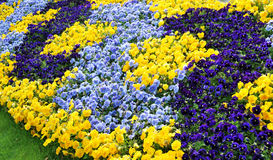 Цветки в парке Женевы Стоковая Фотография