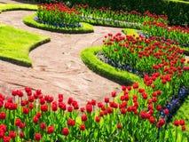 Цветки в парке Стоковые Изображения