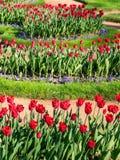 Цветки в парке Стоковое Изображение RF