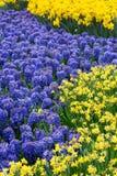 Цветки в парке Keukenhof, Lisse Стоковое Фото